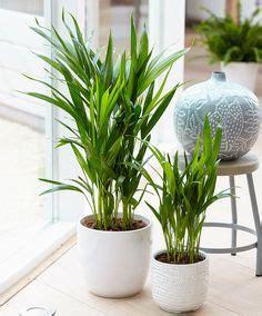 houseplants   clean  air  breathe