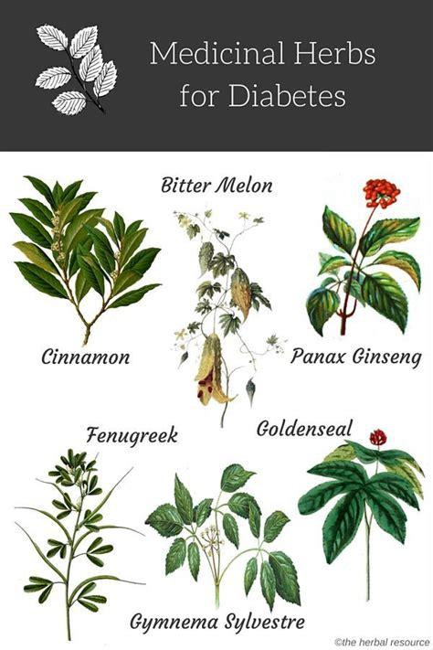 Diskon Teh Herbal Diabetes Diabetea Insuline herbs for diabetes treatment and relief uses and benefits