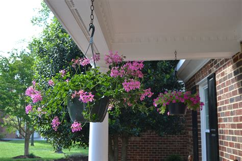 Porch Hanging Plants is in bloom these days of mine