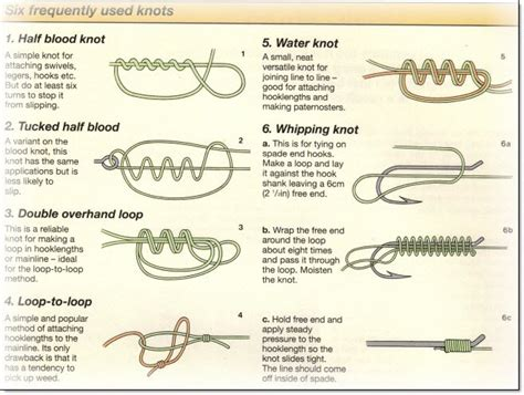 Blood Knot Diagram
