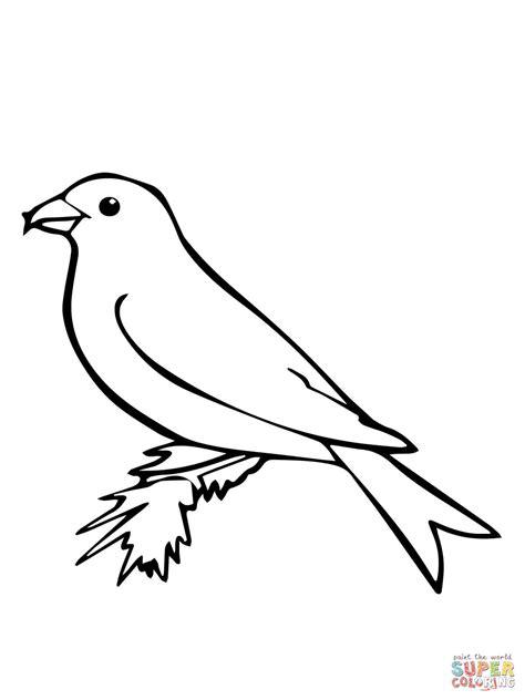 cockatiel bird coloring pages coloring pages