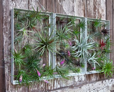 Tillandsia On Pinterest Air Plants Air Plant Display Outdoor Garden Wall Decor