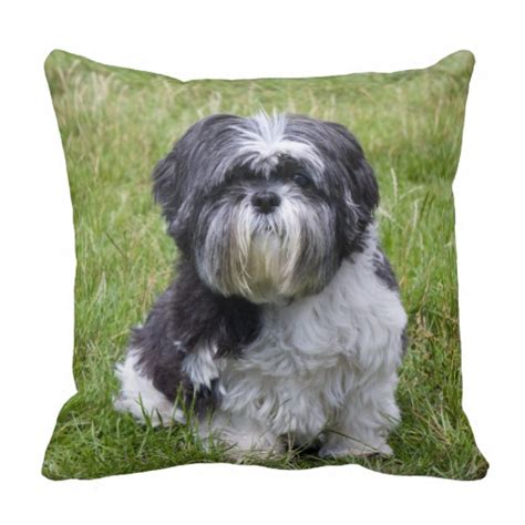 shih tzu pillow shih tzu beautiful photo cushion pillow zazzle