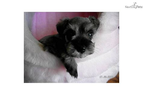crate small breed puppies small crate small puppies breeds picture