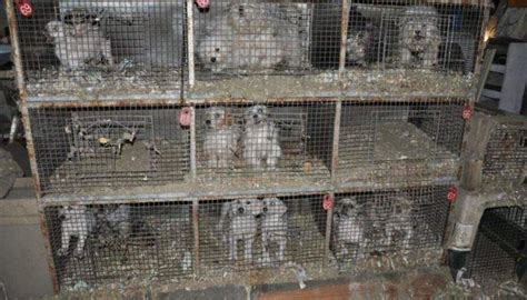 puppy mills in pa the most horrible 100 puppy mills in the country exposed urdogs