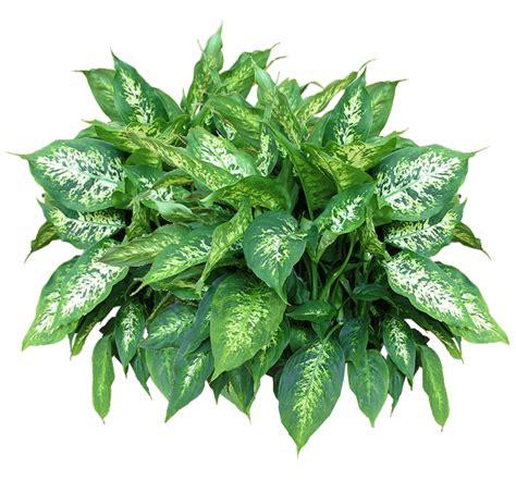 Bild Mit Echten Pflanzen by Plants Png Transparent Free Images Png Only
