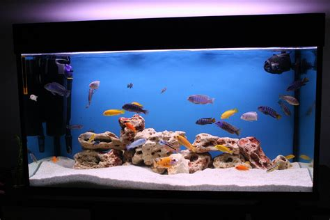 aquarium design ideas best aquarium ideas