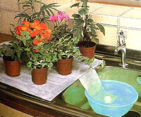 quanto bagnare le orchidee partiamo per le vacanze come avere cura e innaffiare le