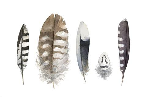 nature david scheirer watercolors