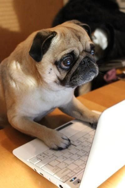 pug working out where the heck has my broadband uber