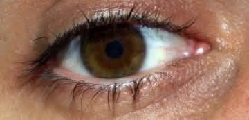 brown eye color image gallery light brown eye color