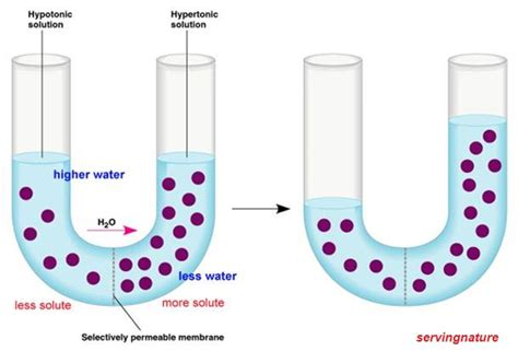 healthy healthy mind disorders of water electrolytes
