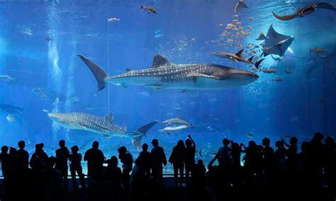japanese aquarium image gallery japanese aquarium