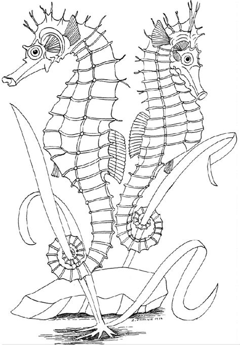 coloring pages for adults underwater ocean scenes coloring pages az coloring pages