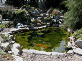 file flickr brewbooks koi pond jpg