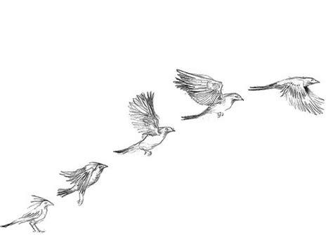libro bird art drawing birds bird drawing on