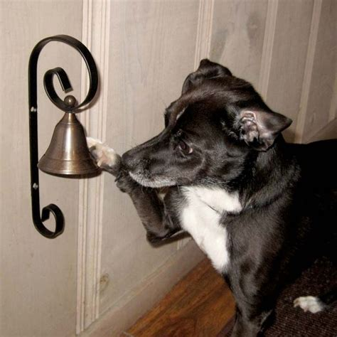 house training a dog with a bell training your dog to ring a bell to go out to potty pet ideas pinterest door