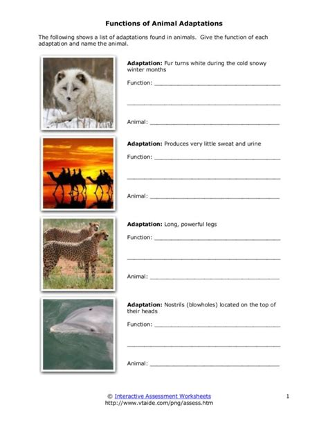 Adaptation Worksheet adaptation worksheets 7th grade images