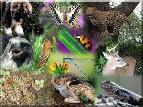 imagenes relacionadas con otoño biologia con pau jaja act 2 im 225 genes relacionadas con