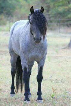 pictures mustang horse with smoke reverse dapple blue roan horse murgese stallion horses