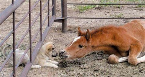 puppies and horses top favorites horses puppys and baby puppies litle pups