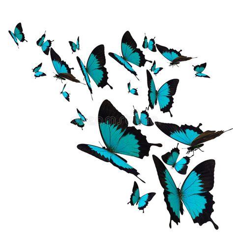 farfalle clipart gruppo di farfalle illustrazione di stock illustrazione