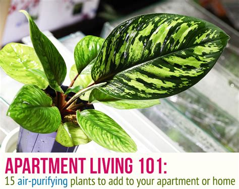 plants for apartments 15 indoor air purifying plants for your apartment or home