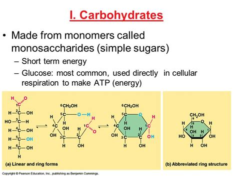 5 common carbohydrates four major types of biological macromolecules ppt