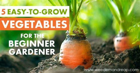 easy vegetable gardening for beginners 5 easy to grow vegetables for the beginner gardener