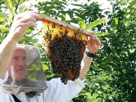 top bar beekeeping abuzz over top bar beekeeping homesteading and livestock