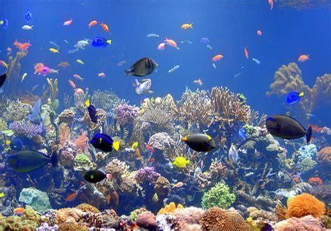 types of aquariums marine aquarium aquarium cares