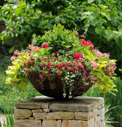 container gardening thrill fill and spill three easy steps to container