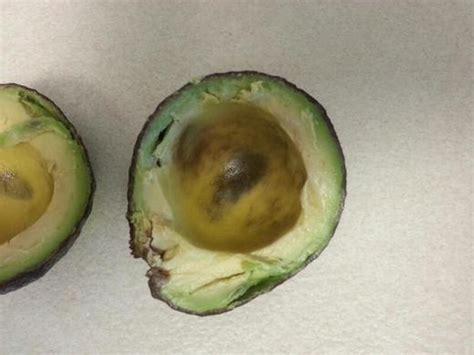 my ate avocado is this avocado safe to eat general discussion avocados page 2 chowhound