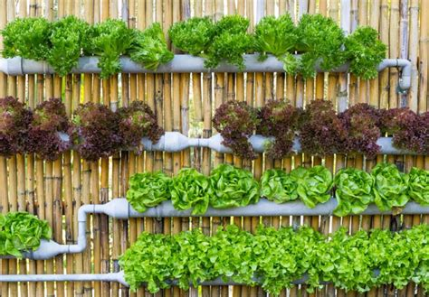 vertical vegetable gardening ideas vertical vegetable garden ideas corner