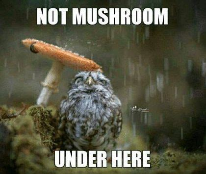 Mushroom Meme - how do mushrooms make it rain 187 science abc