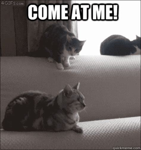 Cat Fight Meme - come at me cat fight