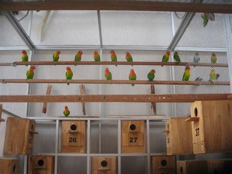 Telur Palsu Mainan Burung Merpati kandang lovebird yang baik dan benar untuk umbaran ternak