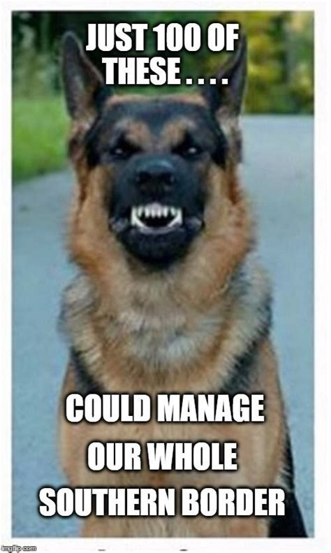 German Memes - german shepherd memes german shepherd training