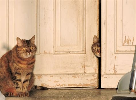 cats on the porch free stock photo public domain pictures