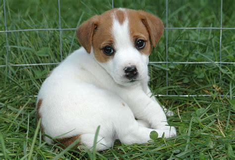kleine hunde suche kleine aber s 252 223 e rassen kleine hunde suesse hunde
