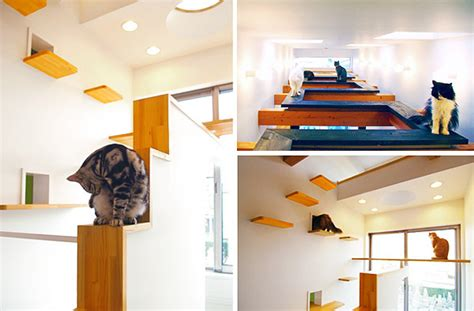 cat friendly home design c 243 mo tener una casa apta para gatos la comuna pink