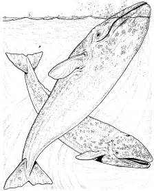 Hawaiian Whale Colouring Pages Page 2 sketch template