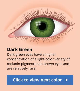 dark green color meaning human eye color chart with fun facts