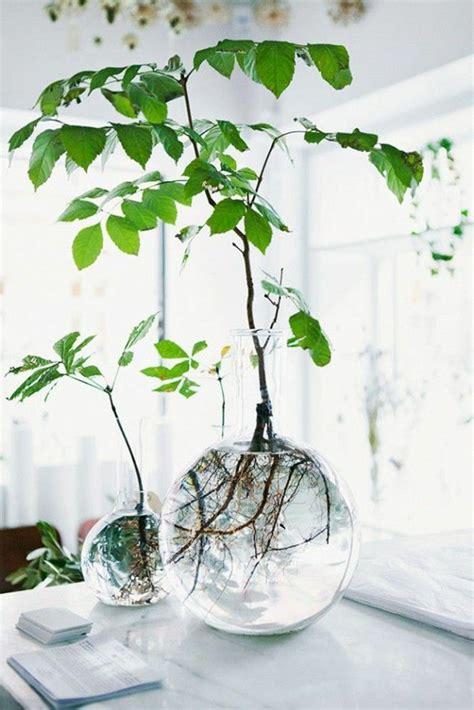 coole zimmerpflanzen savourez la beaut 233 de la plante d int 233 rieur dans notre