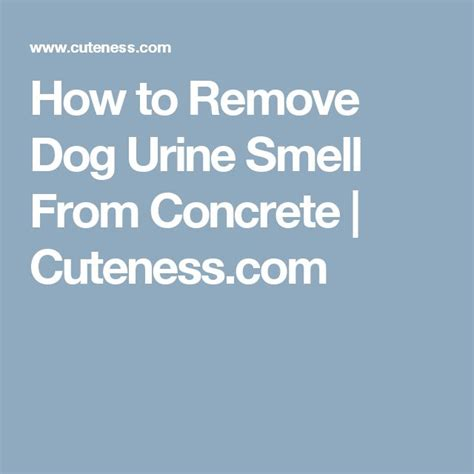 Remove Urine From by How To Remove Urine Smell From Concrete Cuteness