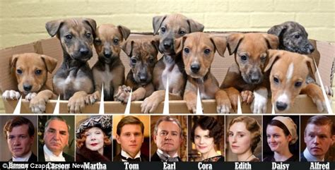 nine abandoned lurcher puppies named after downton