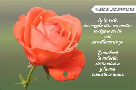 imagenes rosas versos imagenes de rosas con poemas cortos imagenes de flores