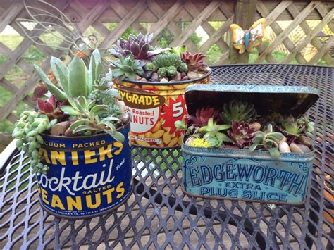 Hens And Planter Ideas by 83 Best Images About Hens And Succulents On