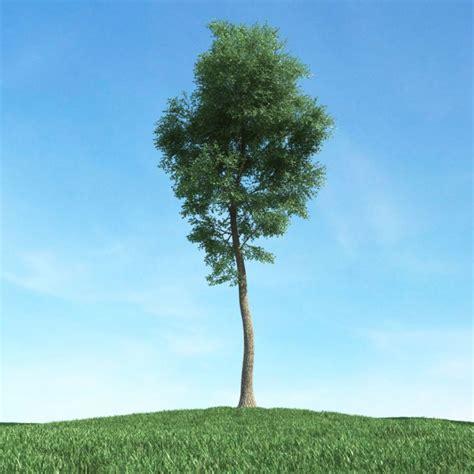 thin tree green thin tree 3d model cgtrader