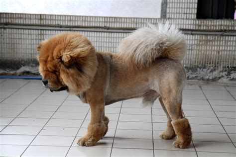 breeds that start with c breeds that start with c pets world
